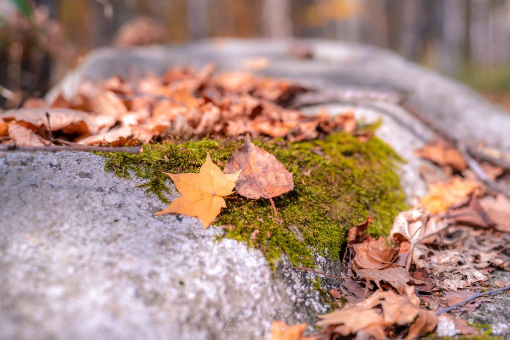岩の上に落ち葉が二枚